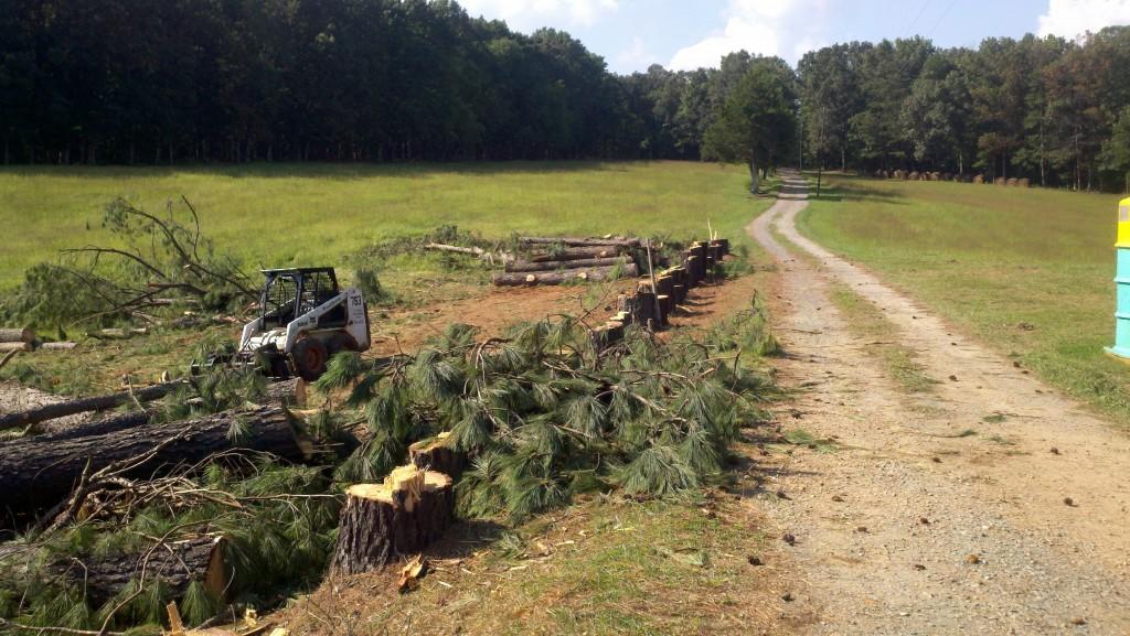 Tree Falling - August 2012